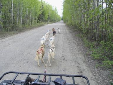 9 Dog team